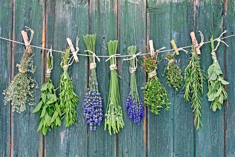 Dried Plants and Herbs